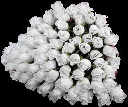 белые-розы